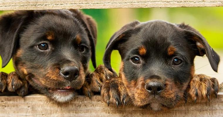 Services et produits pour les animaux au Touvet